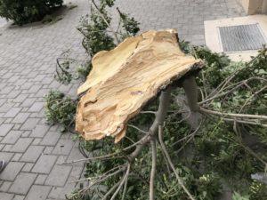 バクー風の街 倒木