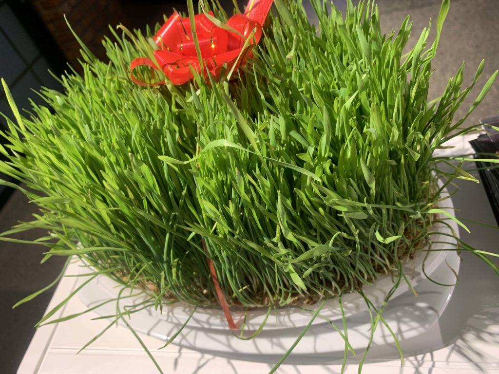 ノウルズの芝生